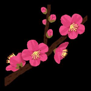 flower_ume_kaika